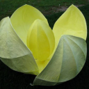 lotus,0.90x0.50m,2009