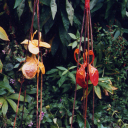 stokbloemen